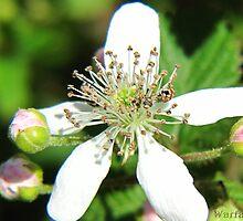 Spring Flower 11 by WarfareFX