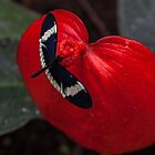 Butterfly on Red Leaf by Withns