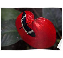 Butterfly on Red Leaf Poster