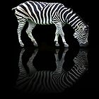 Reflective Zebra by Carol  Lewsley