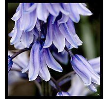 Flowers Squared - Bells Photographic Print