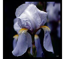 Flowers Squared - Purple Princess Photographic Print