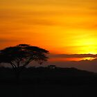 African Sunset. by Brendan Buckley