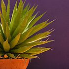 Agave on a Purple Wall by Linda Gregory