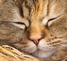 Sleeping Beauty by jean-louis bouzou