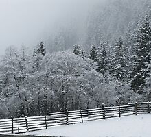 Snow on Trees by Christine Wilson
