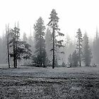 Yellowstone Mist by dgbimages
