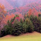 Cades Cove Colors by WTBird