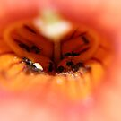 Ants in a Flower by Richard Skoropat