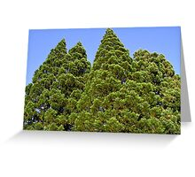 The Tree Giants Greeting Card