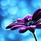 Liquid Drop by maf01
