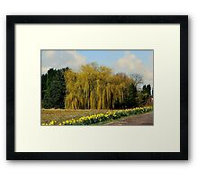 Willow & Daffodils Framed Print