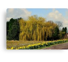 Willow & Daffodils Canvas Print