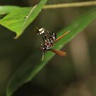 Bolivian Rainforest: Wasp by tpfmiller