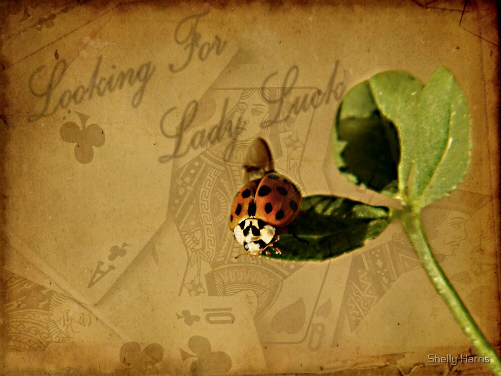 Looking For Lady Luck by Shelly Harris