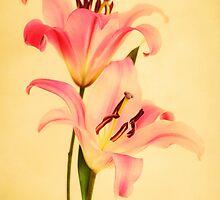 Fleur de Lis by Priska Wettstein