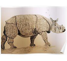 Indian Rhino Poster