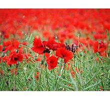 The Red Blanket Photographic Print