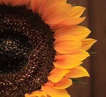 Sunflower by Brian Scott