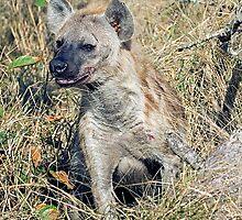 Hyena by Michael  Moss