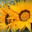 Big Yellow Daisies by ElsT