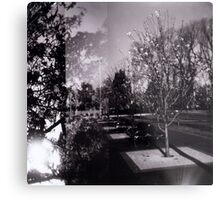 Bloom trees in Carlton Metal Print
