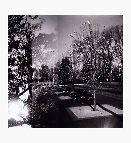Bloom trees in Carlton Photographic Print