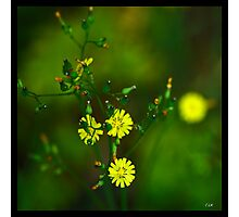 Flowers Squared - Delicate Photographic Print