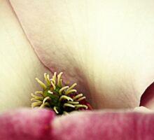March Magnolia Sticker