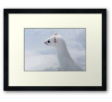 Ermine Profile / Short Tail Weasel Framed Print