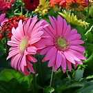 Pretty Pink Daisies by MichelleR