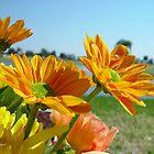 Spring Bouquet 2 by Christina Spiegeland
