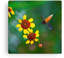 The Honey Bee on My Digital Canvas.... Canvas Print