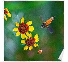 The Honey Bee on My Digital Canvas.... Poster