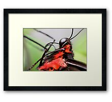 The Nose That Knows Framed Print