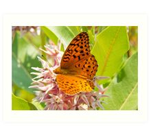 Orange Tiger Butterfly On Pink Flowers Art Print