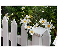Daisy Fence Poster