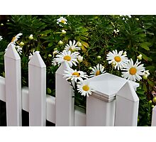 Daisy Fence Photographic Print
