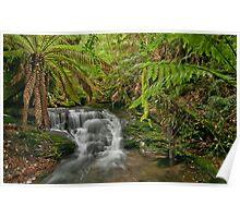 Tasmanian rainforest Poster