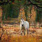 Unicorn Horse by dougf