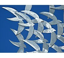 Flying - Zincalume Cutouts Photographic Print