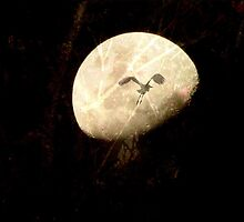 The Bird and the Moon by Louise Linossi Telfer