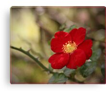 A rose etc. Canvas Print