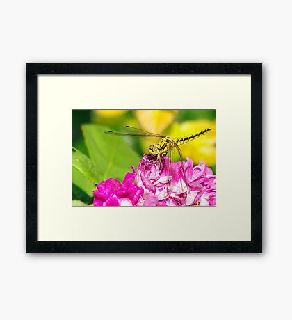 On A Wing and a Pppplant Framed Print