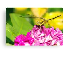 On A Wing and a Pppplant Canvas Print
