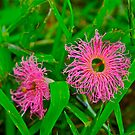 Tiny Pink Weeds by Jen Waltmon