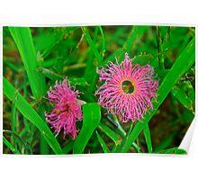 Tiny Pink Weeds Poster
