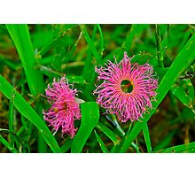 Tiny Pink Weeds Photographic Print