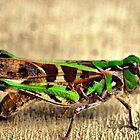 Ahhhh Grasshopper by Clive