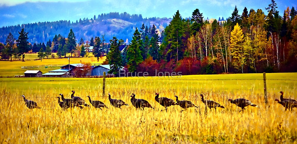 """The Wild Turkey Walk"" by Bruce Jones"